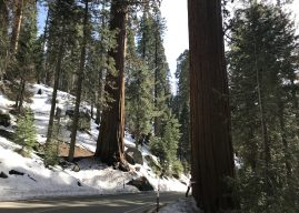 Magical energy in the Sequoia National park